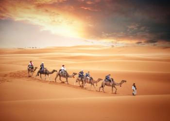 camel-trek2
